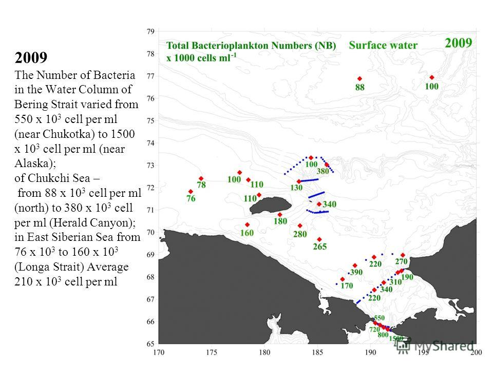 2009 The Number of Bacteria in the Water Column of Bering Strait varied from 550 x 10 3 cell per ml (near Chukotka) to 1500 x 10 3 cell per ml (near Alaska); of Chukchi Sea – from 88 x 10 3 cell per ml (north) to 380 x 10 3 cell per ml (Herald Canyon