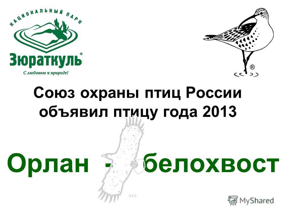 Союз охраны птиц России объявил птицу года 2013 Орлан - белохвост