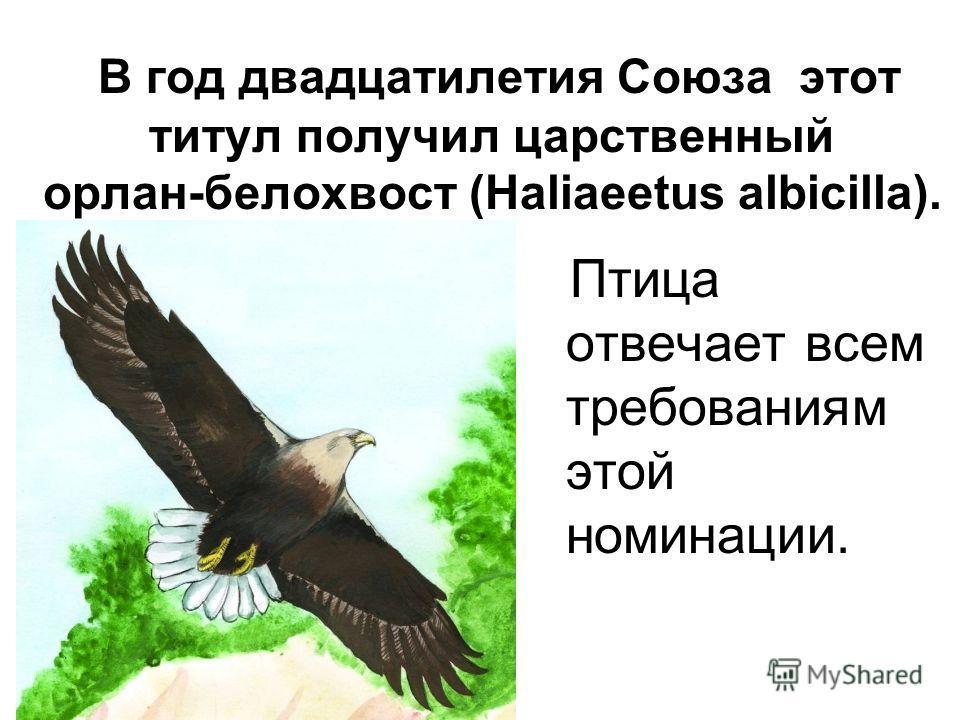 В год двадцатилетия Союза этот титул получил царственный орлан-белохвост (Haliaeetus albicilla). Птица отвечает всем требованиям этой номинации.