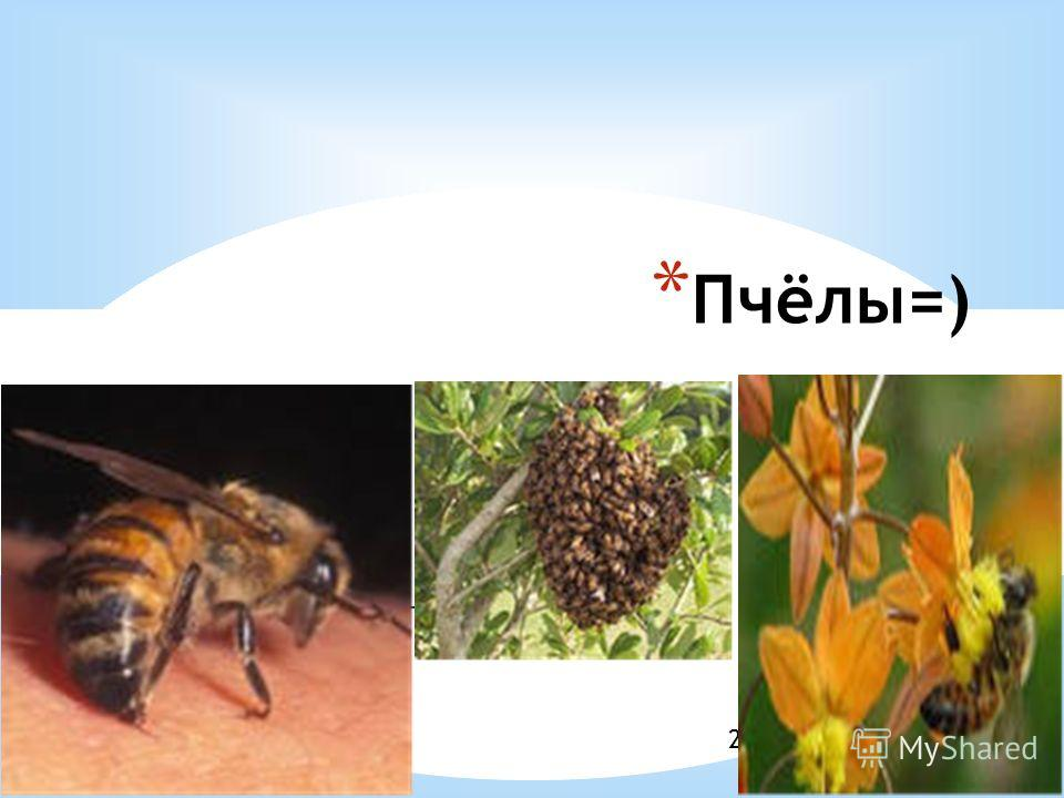 Образец подзаголовка 21.10.13 * Пчёлы=)