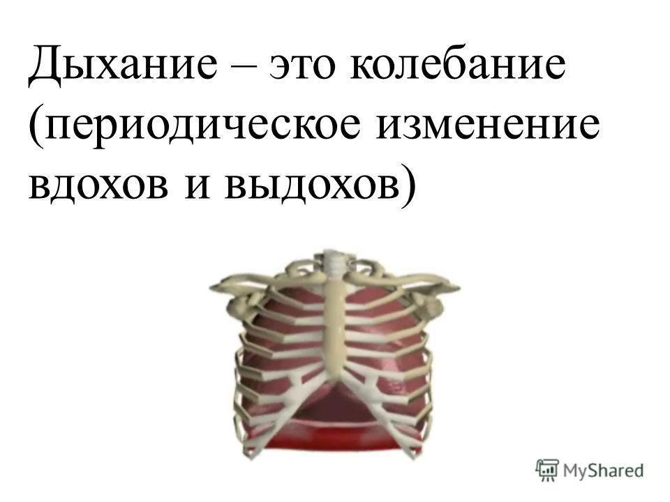 Дыхание – это колебание (периодическое изменение вдохов и выдохов)