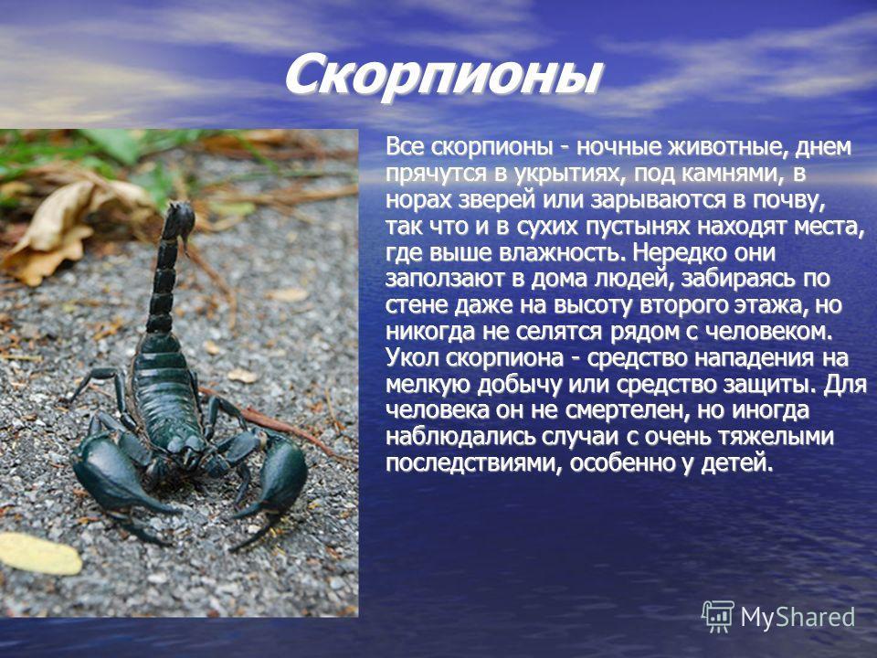 Скорпионы Все скорпионы - ночные животные, днем прячутся в укрытиях, под камнями, в норах зверей или зарываются в почву, так что и в сухих пустынях находят места, где выше влажность. Нередко они заползают в дома людей, забираясь по стене даже на высо