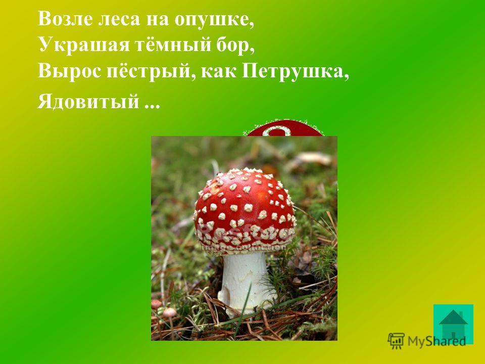 Ходят в рыженьких беретах, Осень в лес приносят летом. Очень дружные сестрички – Золотистые...
