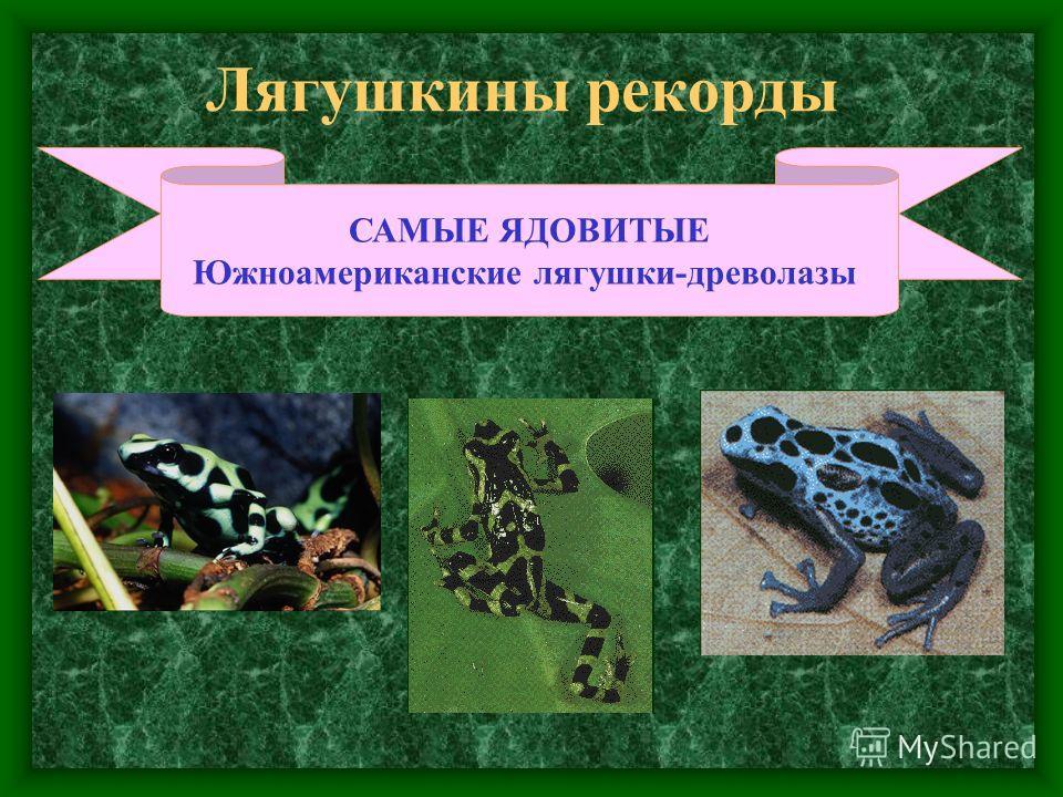 Лягушкины рекорды САМЫЕ ЯДОВИТЫЕ Южноамериканские лягушки-древолазы