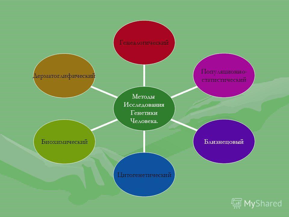 Методы Исследования Генетики Человека. Генеалогический Популяционно- статистический БлизнецовыйЦитогенетическийБиохимическийДерматоглифический