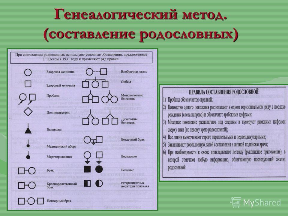 Генеалогический метод. (составление родословных)