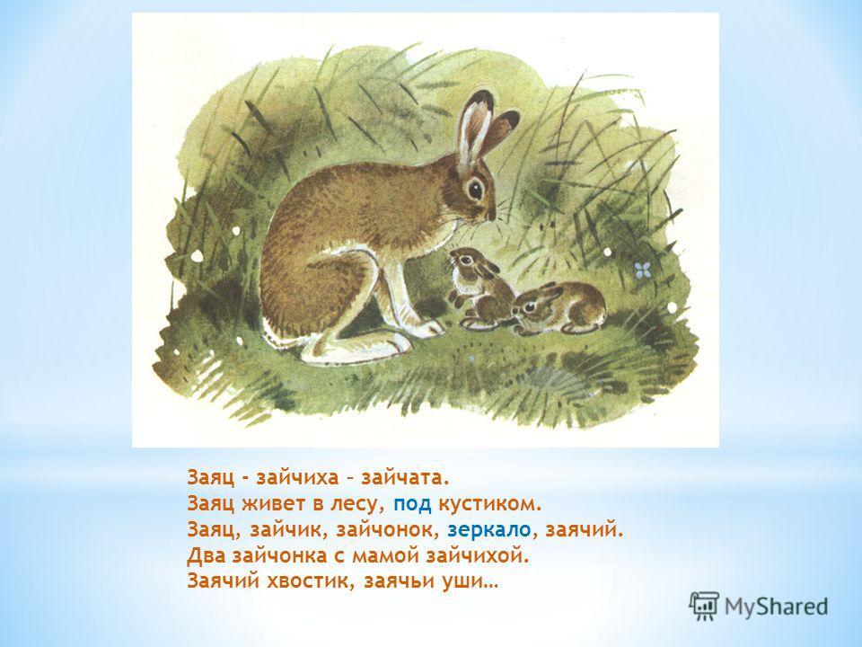 Заяц - зайчиха – зайчата. Заяц живет в лесу, под кустиком. Заяц, зайчик, зайчонок, зеркало, заячий. Два зайчонка с мамой зайчихой. Заячий хвостик, заячьи уши…