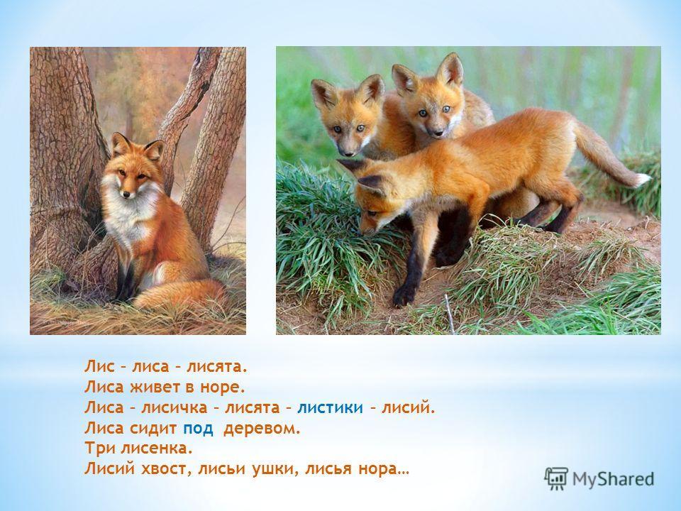 Лис – лиса – лисята. Лиса живет в норе. Лиса – лисичка – лисята – листики – лисий. Лиса сидит под деревом. Три лисенка. Лисий хвост, лисьи ушки, лисья нора…
