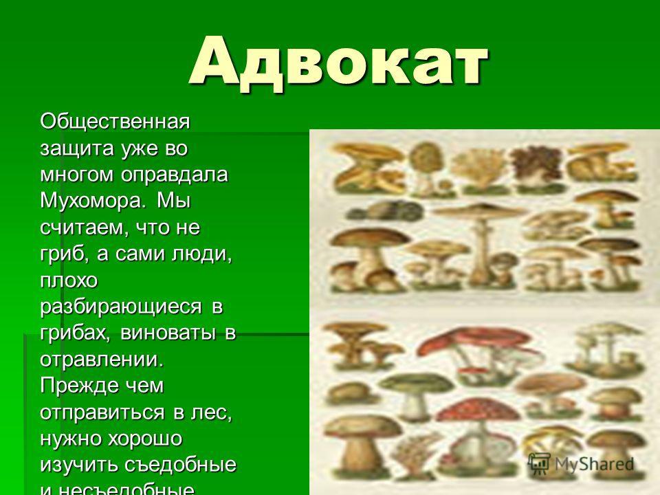Адвокат Общественная защита уже во многом оправдала Мухомора. Мы считаем, что не гриб, а сами люди, плохо разбирающиеся в грибах, виноваты в отравлении. Прежде чем отправиться в лес, нужно хорошо изучить съедобные и несъедобные грибы. Незнакомые гриб