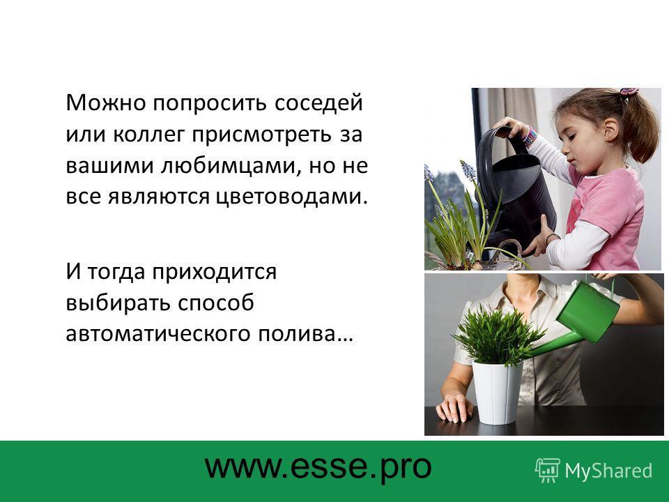Можно попросить соседей или коллег присмотреть за вашими любимцами, но не все являются цветоводами. И тогда приходится выбирать способ автоматического полива… www.esse.pro