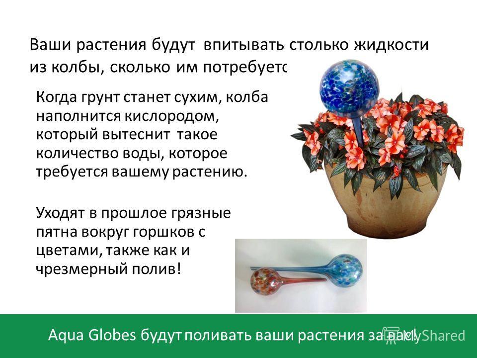 Aqua Globes будут поливать ваши растения за вас! Ваши растения будут впитывать столько жидкости из колбы, сколько им потребуется. Когда грунт станет сухим, колба наполнится кислородом, который вытеснит такое количество воды, которое требуется вашему