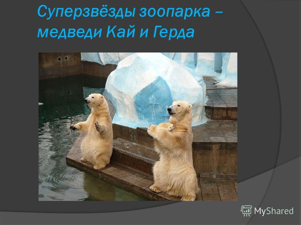 Суперзвёзды зоопарка – медведи Кай и Герда