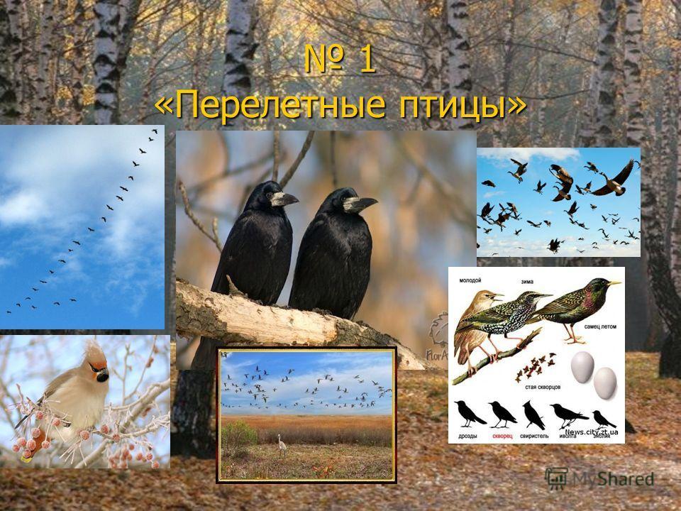 1 «Перелетные птицы» 1 «Перелетные птицы»