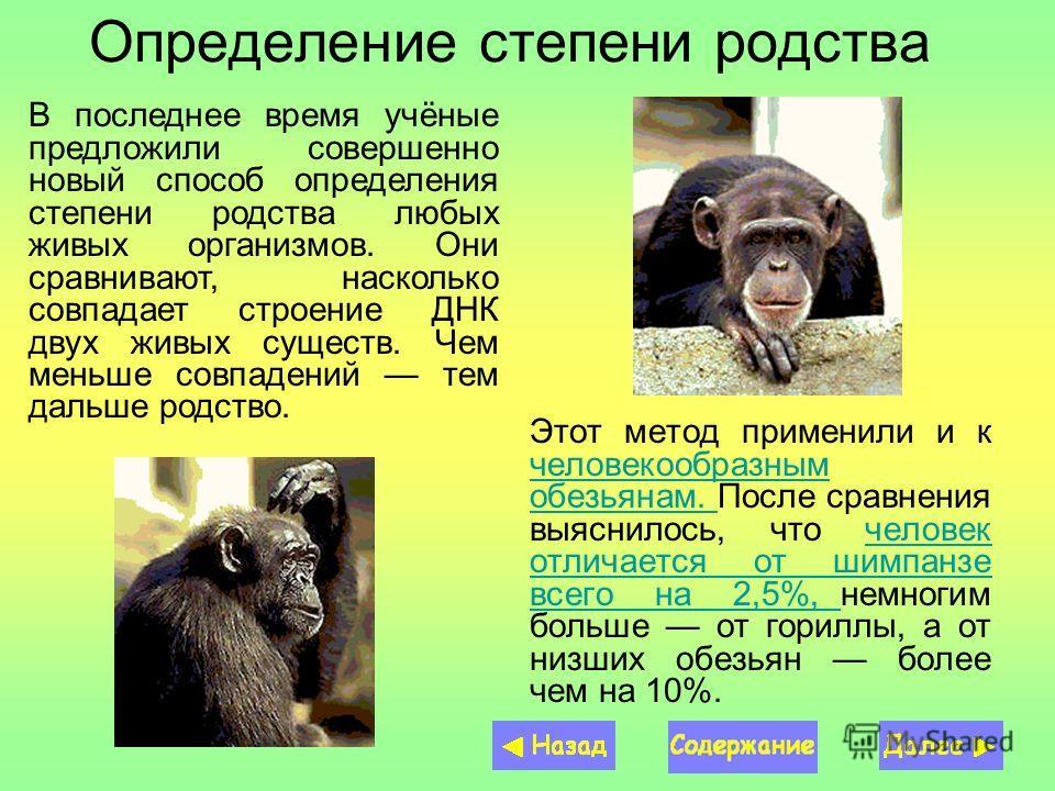 Определение степени родства Этот метод применили и к человекообразным обезьянам. После сравнения выяснилось, что человек отличается от шимпанзе всего на 2,5%, немногим больше от гориллы, а от низших обезьян более чем на 10%. человекообразным обезьяна