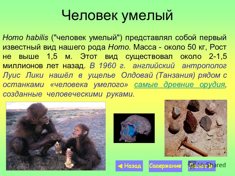 Человек умелый Homo habilis (