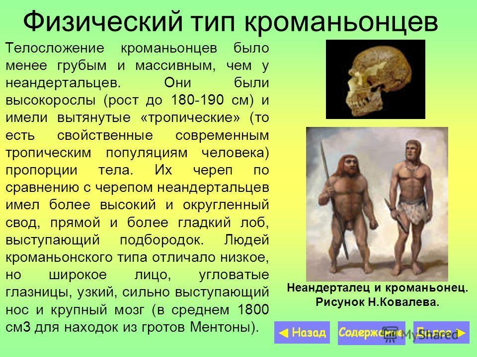 Физический тип кроманьонцев Телосложение кроманьонцев было менее грубым и массивным, чем у неандертальцев. Они были высокорослы (рост до 180-190 см) и имели вытянутые «тропические» (то есть свойственные современным тропическим популяциям человека) пр
