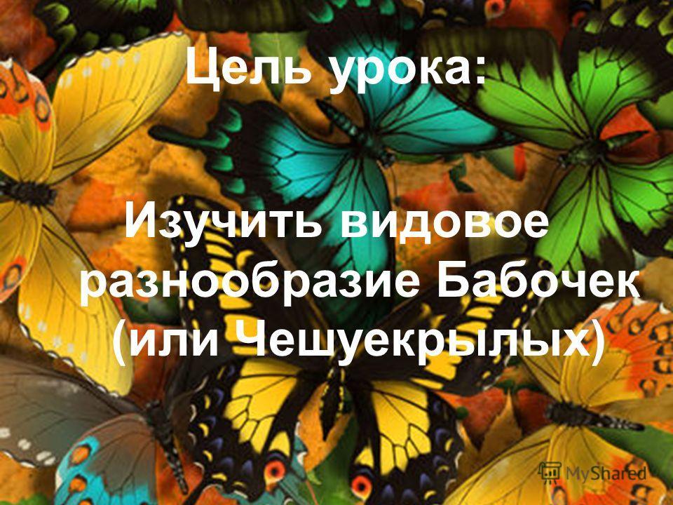 Изучить видовое разнообразие Бабочек (или Чешуекрылых)