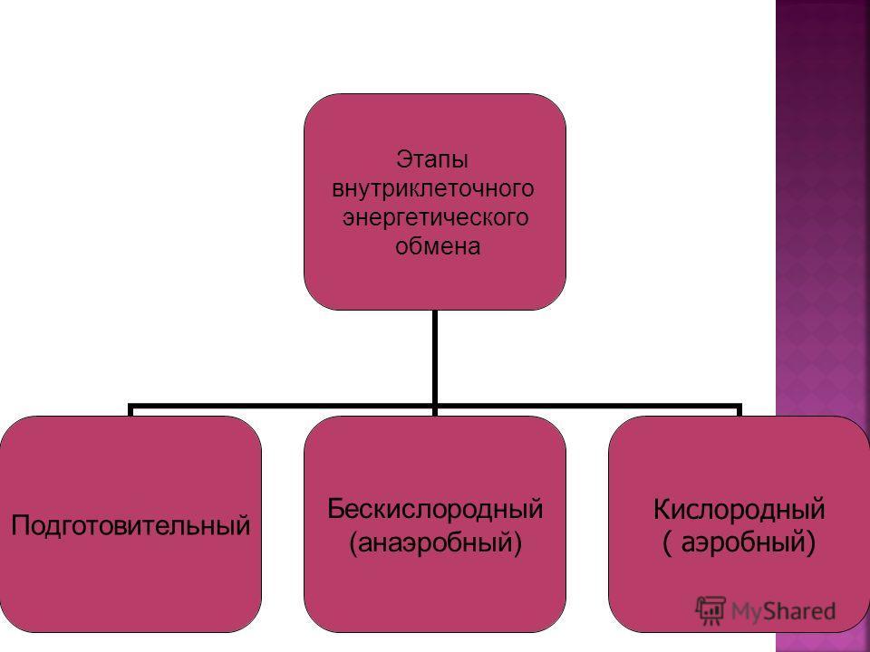 Этапы внутриклеточного энергетического обмена Подготовительный Бескислородный (анаэробный) Кислородный ( аэробный)