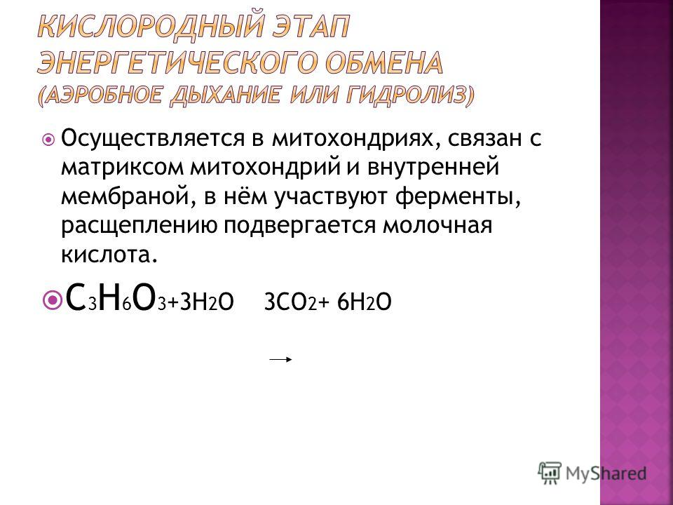 Осуществляется в митохондриях, связан с матриксом митохондрий и внутренней мембраной, в нём участвуют ферменты, расщеплению подвергается молочная кислота. C 3 H 6 O 3 +3H 2 O 3CO 2 + 6H 2 O