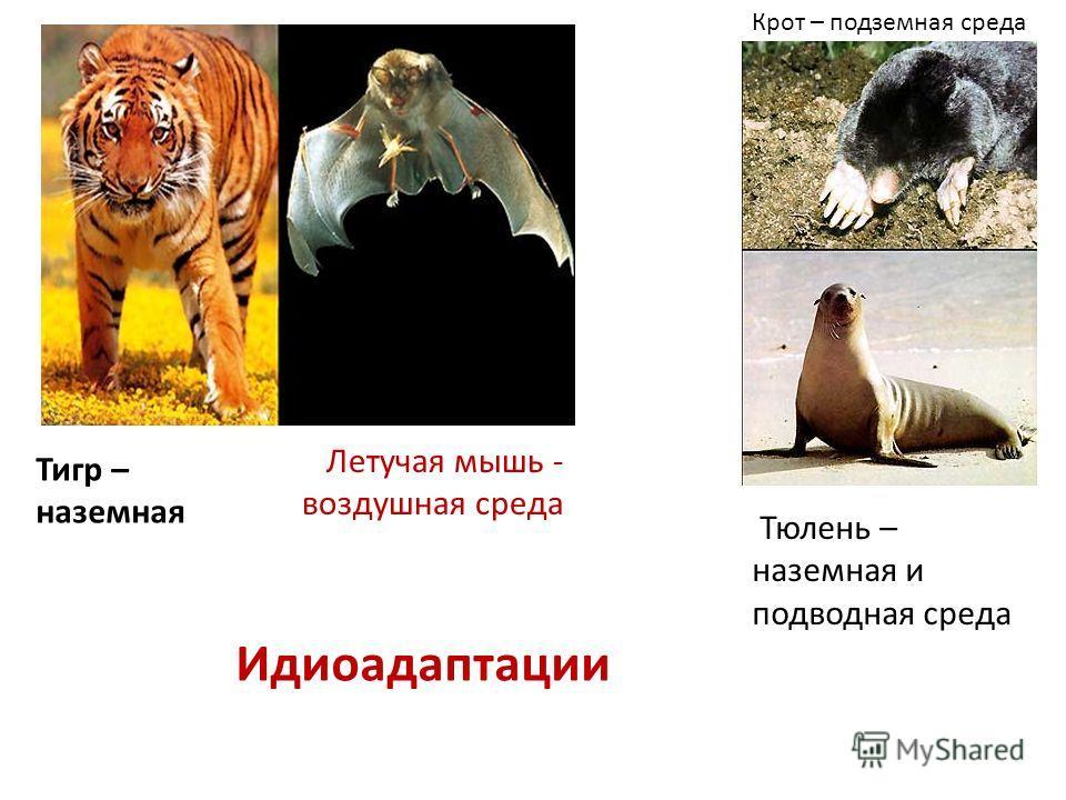 Летучая мышь - воздушная среда Тюлень – наземная и подводная среда Идиоадаптации Крот – подземная среда Тигр – наземная