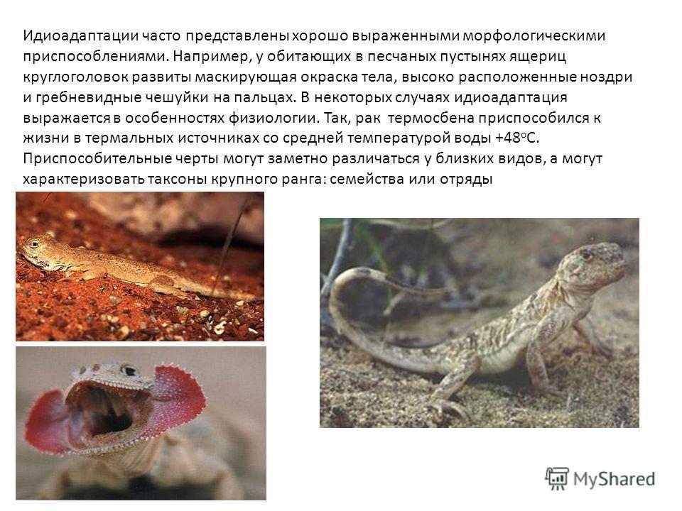 Идиоадаптации часто представлены хорошо выраженными морфологическими приспособлениями. Например, у обитающих в песчаных пустынях ящериц круглоголовок развиты маскирующая окраска тела, высоко расположенные ноздри и гребневидные чешуйки на пальцах. В н