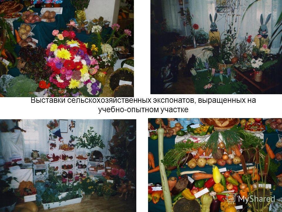 Выставки сельскохозяйственных экспонатов, выращенных на учебно-опытном участке