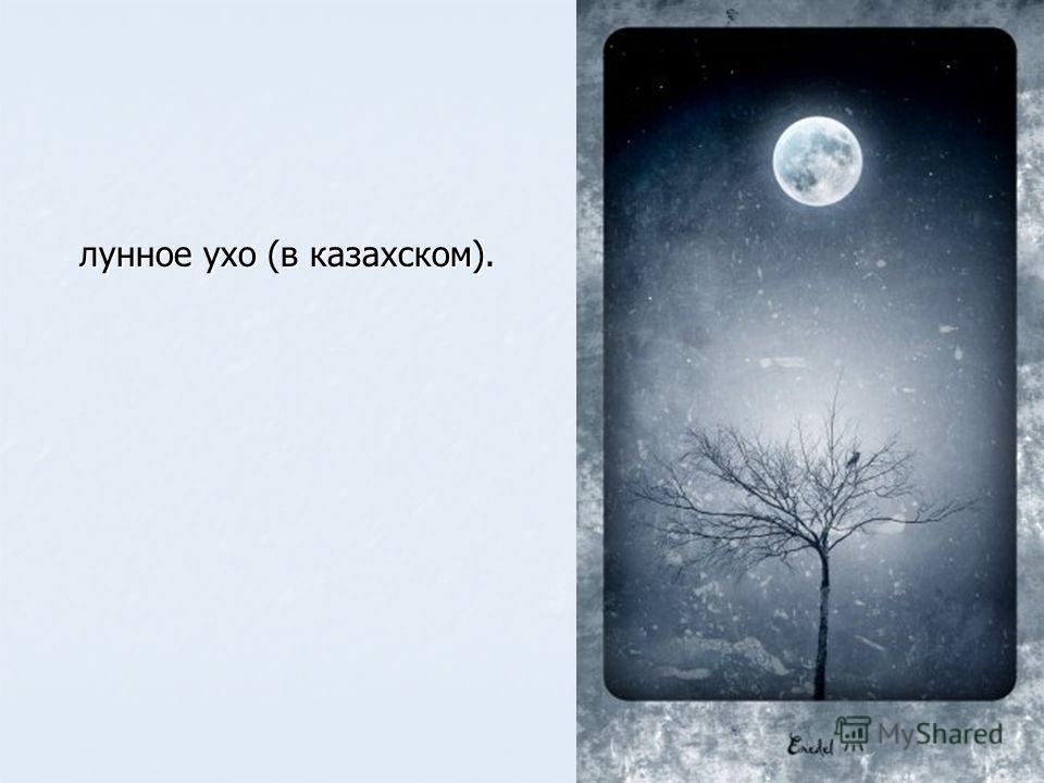 лунное ухо (в казахском).