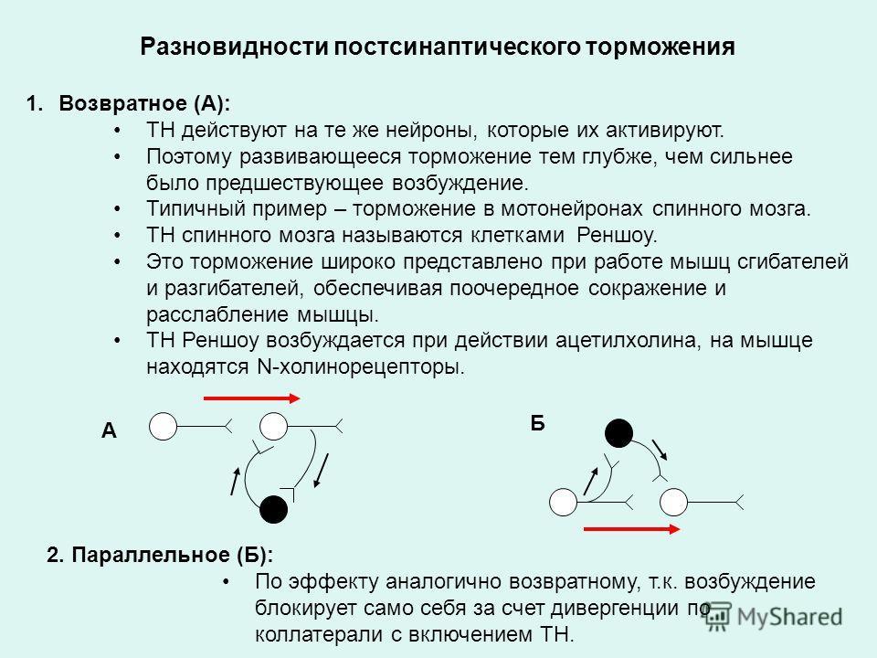 Разновидности постсинаптического торможения 1.Возвратное (А): ТН действуют на те же нейроны, которые их активируют. Поэтому развивающееся торможение тем глубже, чем сильнее было предшествующее возбуждение. Типичный пример – торможение в мотонейронах
