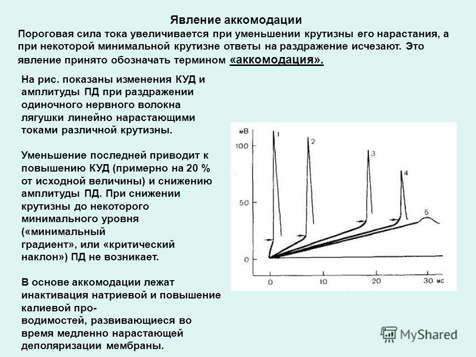 Явление аккомодации Пороговая сила тока увеличивается при уменьшении крутизны его нарастания, а при некоторой минимальной крутизне ответы на раздражение исчезают. Это явление принято обозначать термином «аккомодация». На рис. показаны изменения КУД и