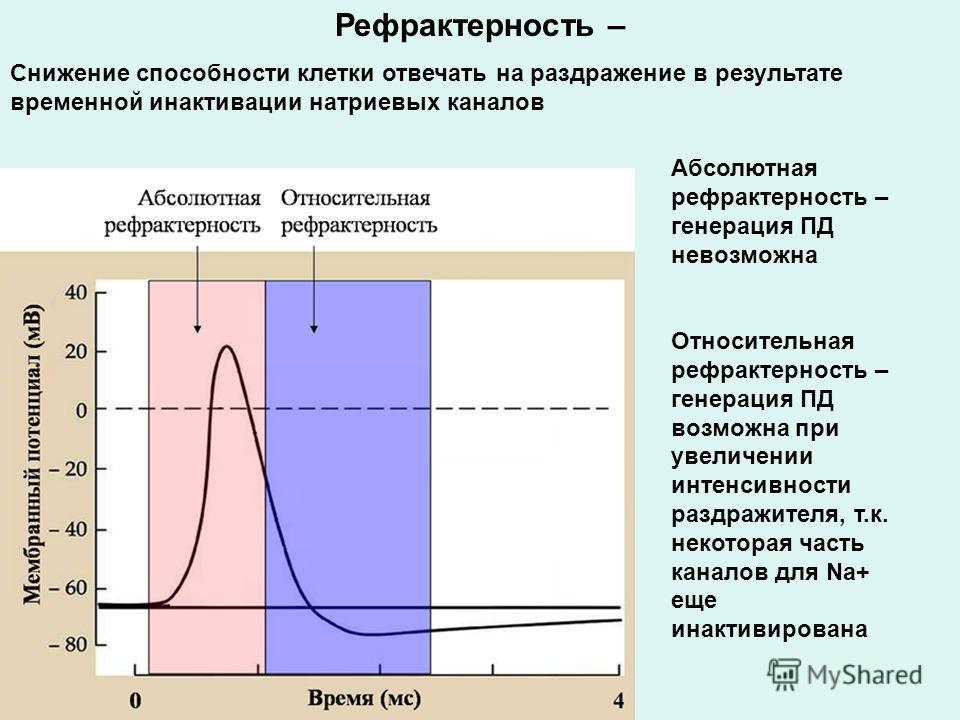 Рефрактерность – Снижение способности клетки отвечать на раздражение в результате временной инактивации натриевых каналов Абсолютная рефрактерность – генерация ПД невозможна Относительная рефрактерность – генерация ПД возможна при увеличении интенсив