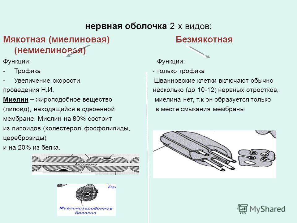 нервная оболочка 2-х видов: Мякотная (миелиновая) Безмякотная (немиелиновая) Функции: -Трофика - только трофика -Увеличение скорости Шванновские клетки включают обычно проведения Н.И. несколько (до 10-12) нервных отростков, Миелин – жироподобное веще