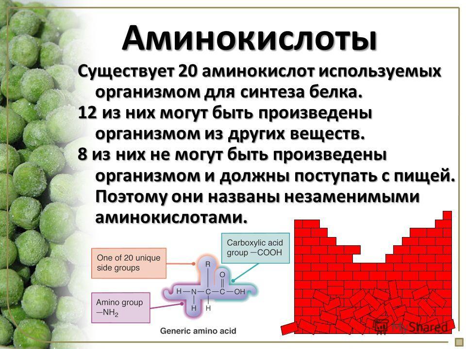 Аминокислоты Существует 20 аминокислот используемых организмом для синтеза белка. 12 из них могут быть произведены организмом из других веществ. 8 из них не могут быть произведены организмом и должны поступать с пищей. Поэтому они названы незаменимым