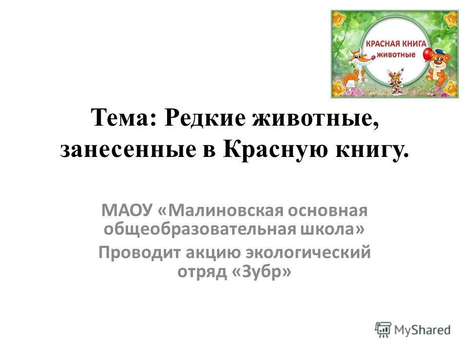 Тема: Редкие животные, занесенные в Красную книгу. МАОУ «Малиновская основная общеобразовательная школа» Проводит акцию экологический отряд «Зубр»