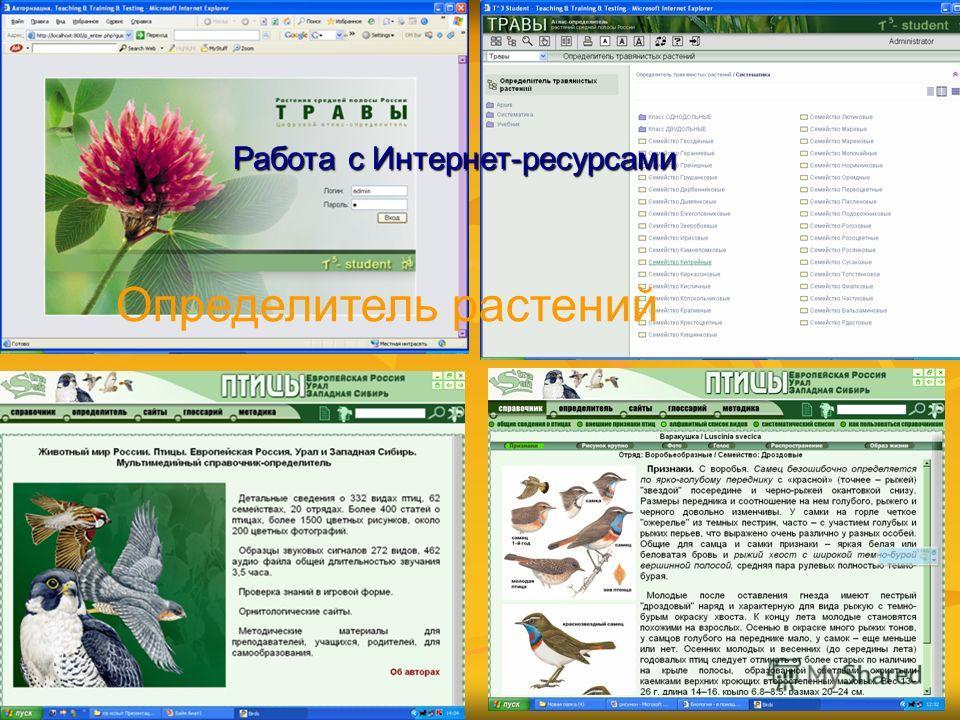 Работа с Интернет-ресурсами Определитель растений