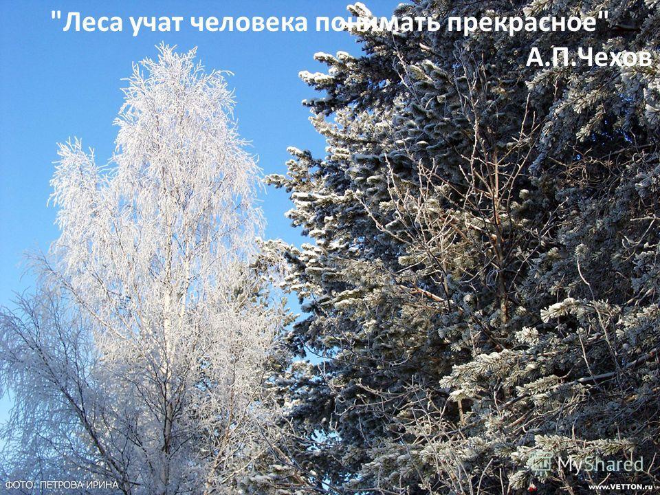Леса учат человека понимать прекрасное А.П.Чехов