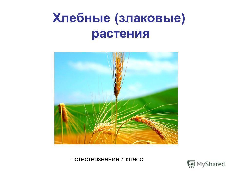 Хлебные (злаковые) растения Естествознание 7 класс