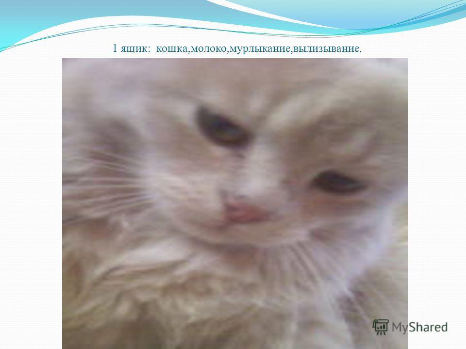 1 ящик: кошка,молоко,мурлыкание,вылизывание.
