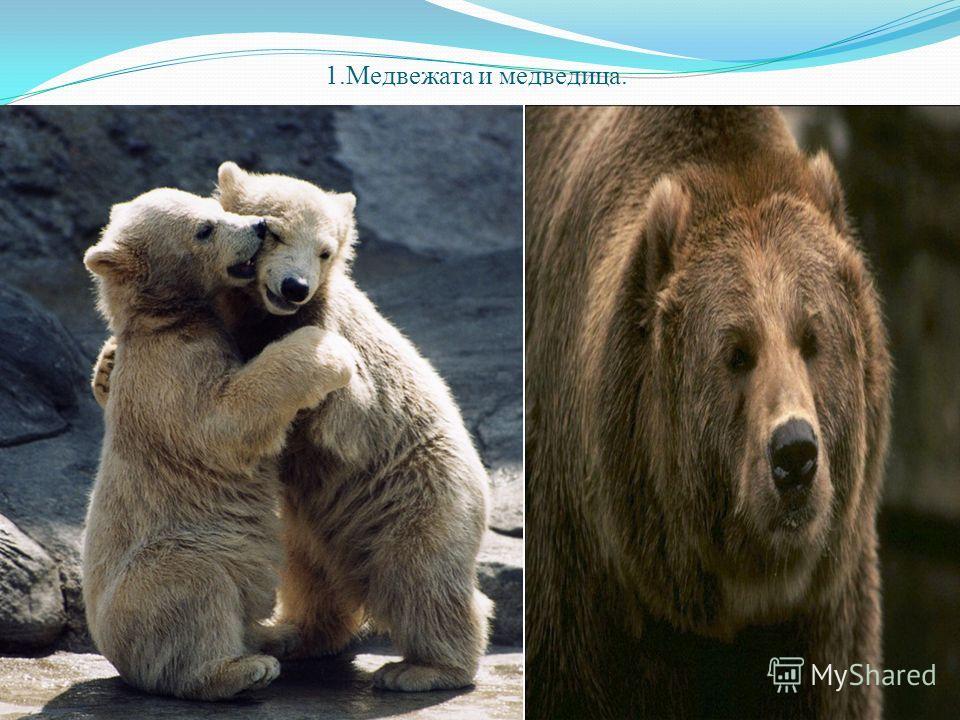 1.Медвежата и медведица.