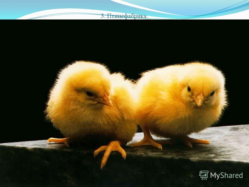 3. Птицефабрика.