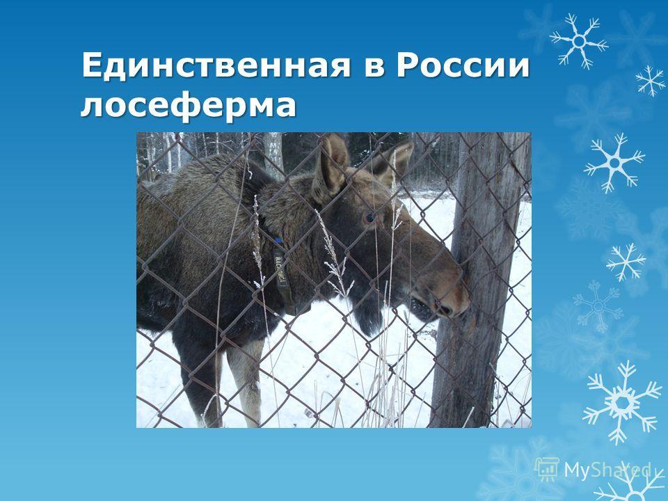 Единственная в России лосеферма