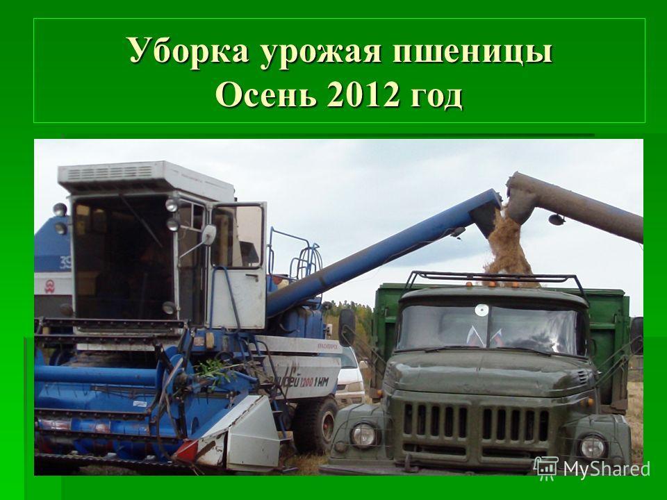 Уборка урожая пшеницы Осень 2012 год