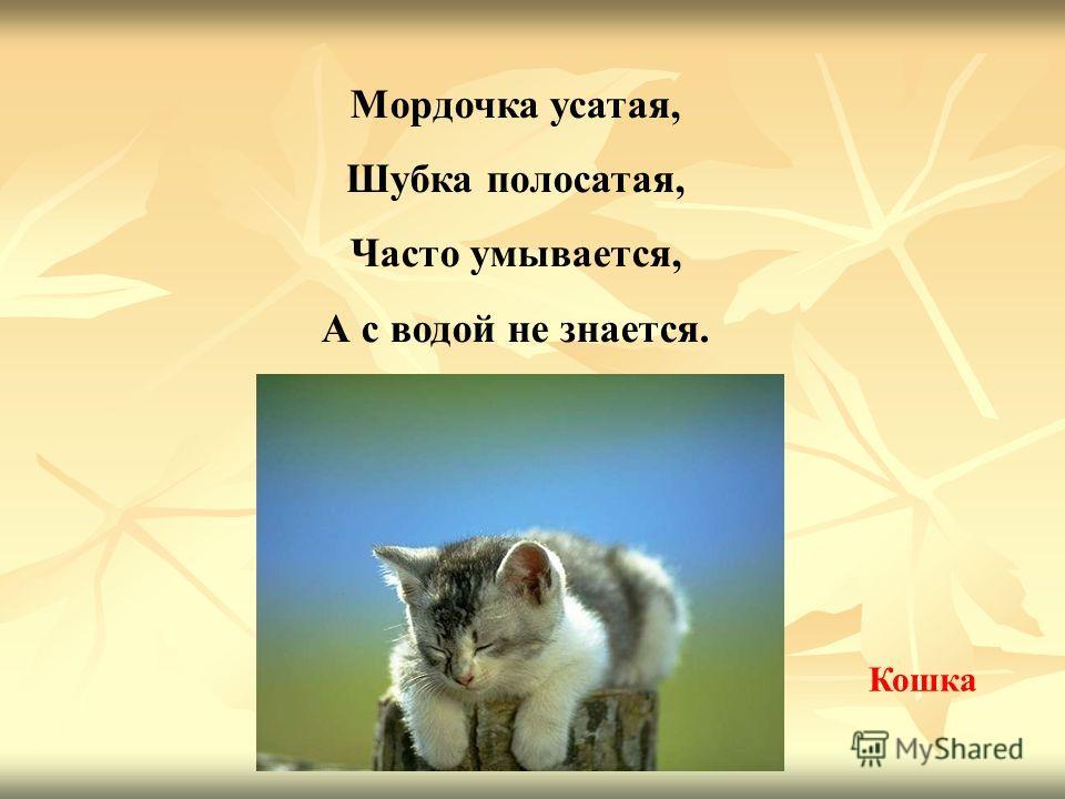 Мордочка усатая, Шубка полосатая, Часто умывается, А с водой не знается. Кошка