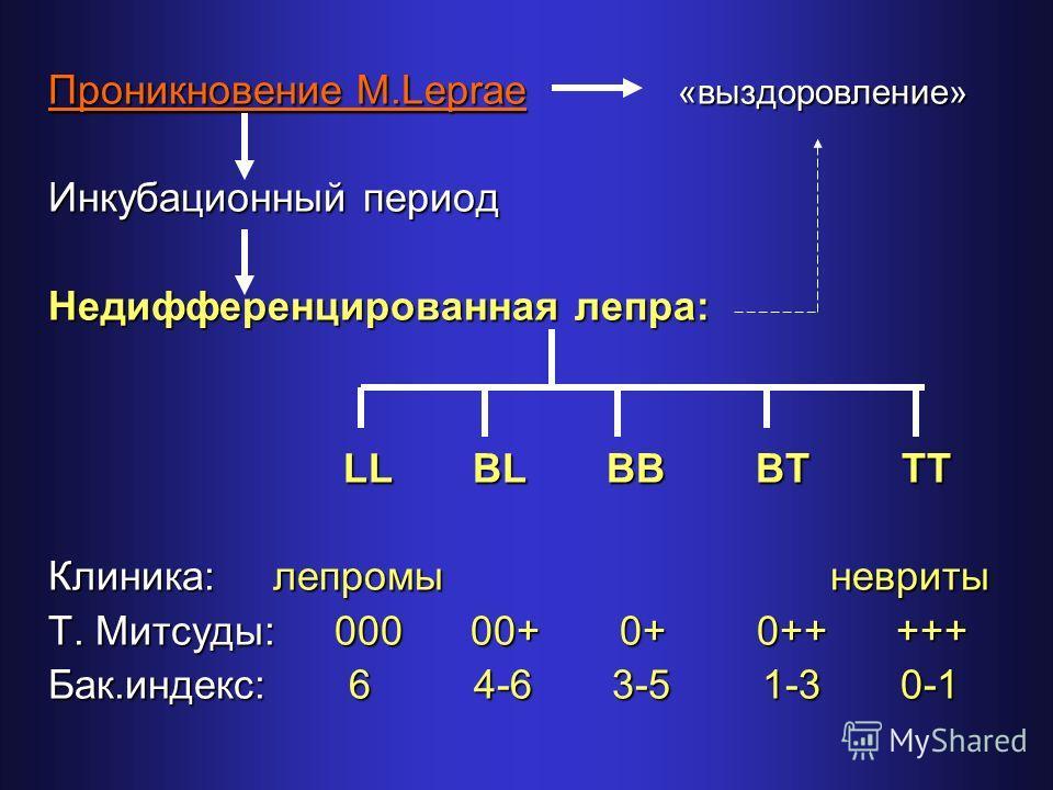 Проникновение M.Leprae «выздоровление» Инкубационный период Недифференцированная лепра: LL BL BB BT TT LL BL BB BT TT Клиника: лепромы невриты Т. Митсуды: 000 00+ 0+ 0++ +++ Бак.индекс: 6 4-6 3-5 1-3 0-1
