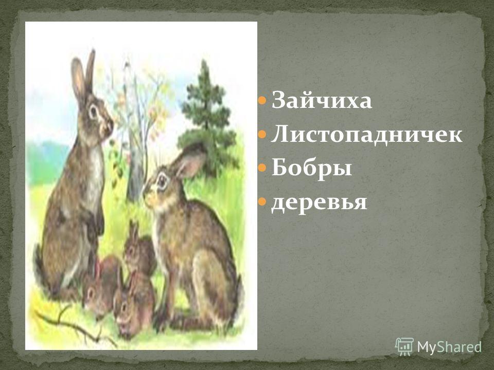 Зайчиха Листопадничек Бобры деревья