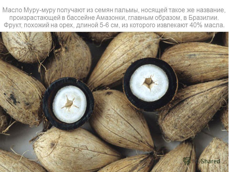 Масло Муру-муру получают из семян пальмы, носящей такое же название, произрастающей в бассейне Амазонки, главным образом, в Бразилии. Фрукт, похожий на орех, длиной 5-6 см, из которого извлекают 40% масла.