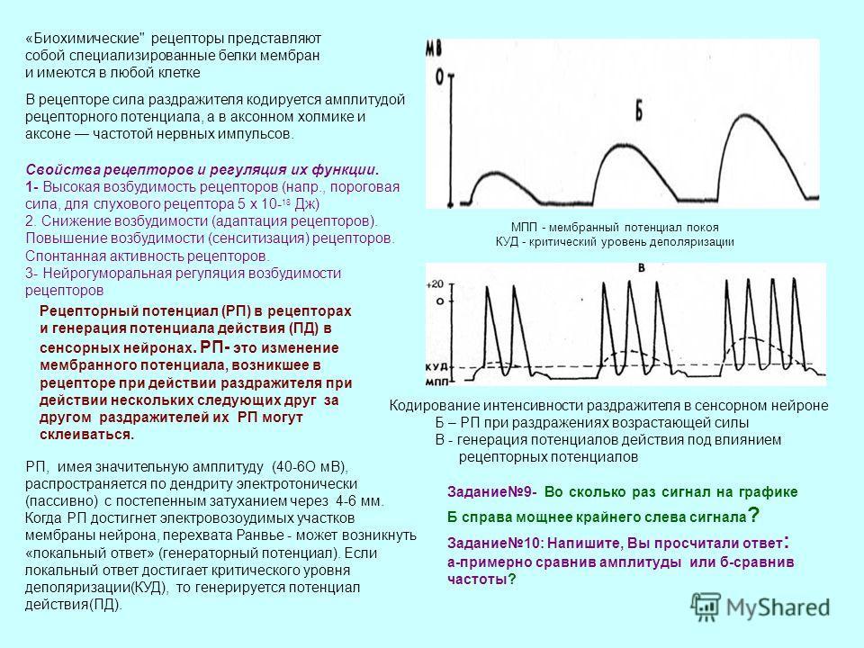В рецепторе сила раздражителя кодируется амплитудой рецепторного потенциала, а в аксонном холмике и аксоне частотой нервных импульсов. Свойства рецепторов и регуляция их функции. 1- Высокая возбудимость рецепторов (напр., пороговая сила, для слуховог