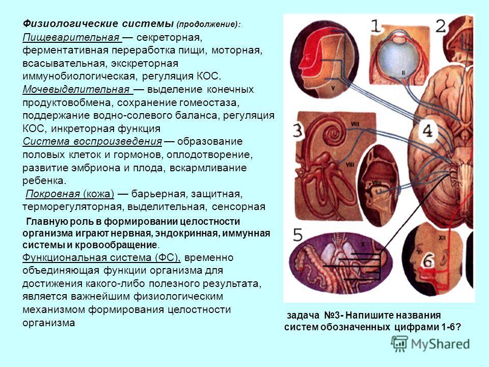 Физиологические системы (продолжение):. Пищеварительная секреторная, ферментативная переработка пищи, моторная, всасывательная, экскреторная иммунобиологическая, регуляция КОС. Мочевыделительная выделение конечных продуктовобмена, сохранение гомеоста