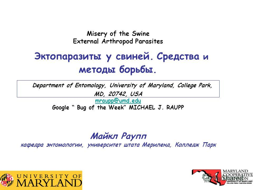 1 Misery of the Swine External Arthropod Parasites Эктопаразиты у свиней. Средства и методы борьбы. Department of Entomology, University of Maryland, College Park, MD, 20742, USA mraupp@umd.edu Google Bug of the Week MICHAEL J. RAUPP Майкл Раупп кафе