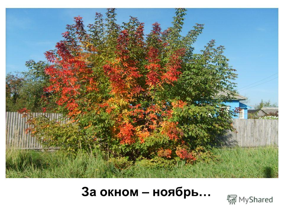За окном – ноябрь…