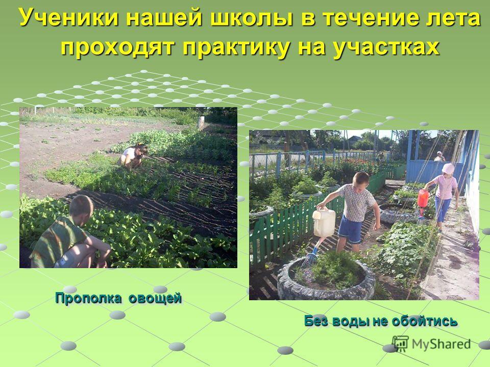 Ученики нашей школы в течение лета проходят практику на участках Прополка овощей Без воды не обойтись